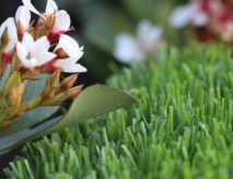 Synthetic Grass For Pools