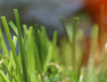Synthetic Grass For Unused Space